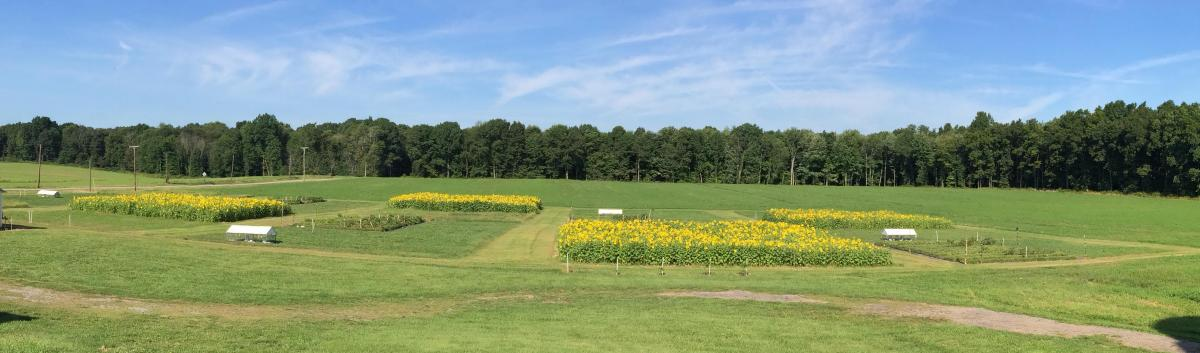 Mellinger farm research plots